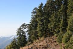美丽的deodar树森林小山在Barot,曼迪,喜马偕尔邦,印度 免版税库存照片