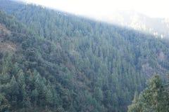 美丽的deodar树森林小山在Barot,曼迪,喜马偕尔邦,印度 免版税库存图片