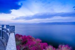 美丽的Flower湖 免版税图库摄影