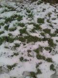 美丽的foto 草设法通过冷的雪得到 库存照片