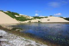 美丽的Genipabu盐水湖和沙丘 库存照片