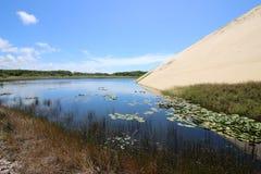美丽的Genipabu盐水湖和沙丘 库存图片
