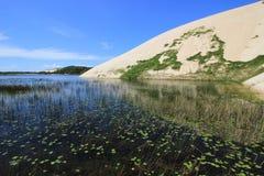 美丽的Genipabu盐水湖和沙丘 免版税库存图片