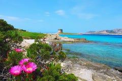 美丽的La Pelosa海滩在斯廷廷奥,撒丁岛,意大利 免版税库存照片