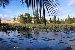 美丽的Lotus湖 库存图片