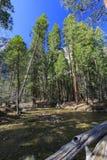 美丽的merced河在优胜美地国家公园 免版税库存照片