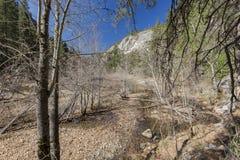 美丽的merced河在优胜美地国家公园 库存图片