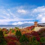 美丽的Momiji秋天五颜六色的红色,绿色和黄色槭树 库存照片