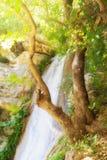 美丽的Neda在希腊 著名瀑布 图库摄影