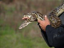 美丽的Python 库存照片