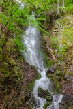 美丽的wilde瀑布在森林里 库存图片