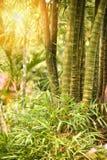 美丽竹的树干 库存图片