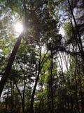 美丽自然 免版税库存照片