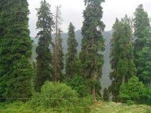 美丽自然scenary巴基斯坦 图库摄影