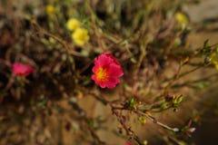 美丽花卉生长在大农场主 库存图片