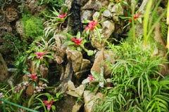 美丽花卉生长在热带雨林里 免版税库存照片