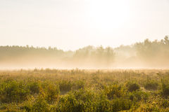 美丽草甸和forrest在一个有雾的早晨 库存图片