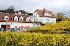 美丽葡萄酒增长在多瑙河银行在秋天在Durnstein镇,奥地利附近 免版税库存照片