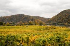 美丽葡萄酒增长在多瑙河银行在秋天在Durnstein镇,奥地利附近 免版税库存图片