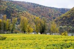 美丽葡萄酒增长在多瑙河银行在秋天在Durnstein镇,奥地利附近 库存照片