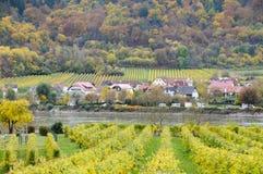 美丽葡萄酒增长在多瑙河银行在秋天在Durnstein镇,奥地利附近 免版税图库摄影