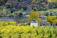美丽葡萄酒增长在多瑙河银行在秋天在Durnstein镇,奥地利附近 库存图片