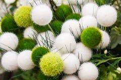 美丽蓬松,温文地,许多装饰圆的植物 免版税库存照片