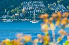 美丽风景和热带在有游艇或航行的蓝色海或者风船在背景和迷离中在前面开花 免版税库存图片