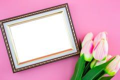 美丽黄色郁金香花和照片框架边界,与在桃红色背景的平的位置 免版税图库摄影