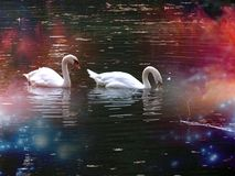 美丽,天鹅,湖,自然,秀丽,爱,inlove,gallen,秋天 免版税库存图片