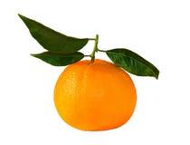 美丽,成熟桔子 图库摄影