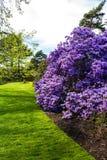 美丽,植物园在春天 免版税库存照片