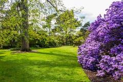 美丽,植物园在春天 图库摄影