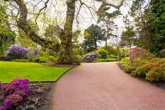 美丽,植物园在春天 库存图片