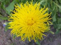 美丽,植物学,颜色,五颜六色,矢车菊,装饰,领域,植物群,花卉,花,开花,花,庭院,金黄, gree 库存图片