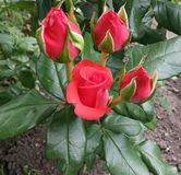 美丽,秀丽,生日,开花,开花,花束,特写镜头,颜色,颜色,植物群,花卉,花,花,庭院,礼物, gre 图库摄影
