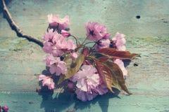 美丽,英语,与日本樱桃树开花的葡萄酒茶杯,关闭 免版税库存照片