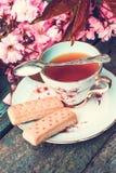 美丽,英语,与日本樱桃树的葡萄酒茶杯开花, 免版税库存照片