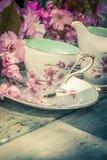 美丽,英语,与日本樱桃树的葡萄酒茶杯开花 库存照片