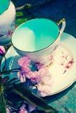 美丽,英语,与日本樱桃树的葡萄酒茶杯开花 免版税图库摄影