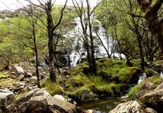 美丽&简单,瀑布在森林里 图库摄影