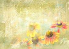 美丽Helenium花卉生长在夏天从事园艺 鸟花卉花明信片 库存照片