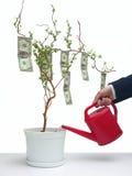 美元一结构树 库存照片