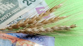 美元和坚戈哈萨克斯坦谷物丰收麦子和钞票的国际市场在绿色背景 图库摄影