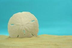 美元沙子 免版税库存图片