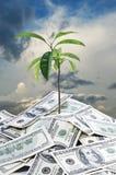 美元生长天空土壤结构树 免版税库存照片