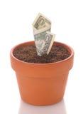 美元花卉生长罐 库存照片