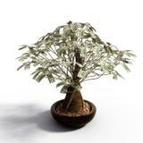 美元货币结构树 库存照片