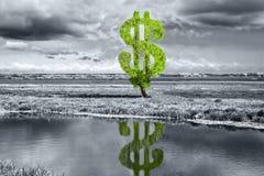 美元结构树 免版税库存图片