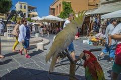 美冠鹦鹉和鹦鹉在老镇罗得岛 免版税库存照片